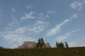 鎮守の杜の空.JPG